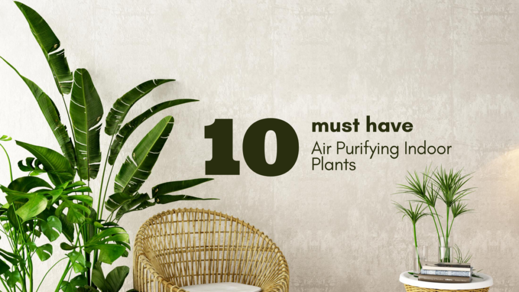 10 Must Have Air Purifying Indoor Plants