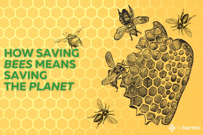 How can we Save the Bees for a Healthy Planet